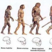 Durant quelle période ont vécu l'homo habilis et l'homme de Neandertal ?