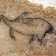 Que nous apprend ce dessin à propos du climat en Provence à l'époque des peintures de la grotte Cosquer ? (cliquez sur l'image)